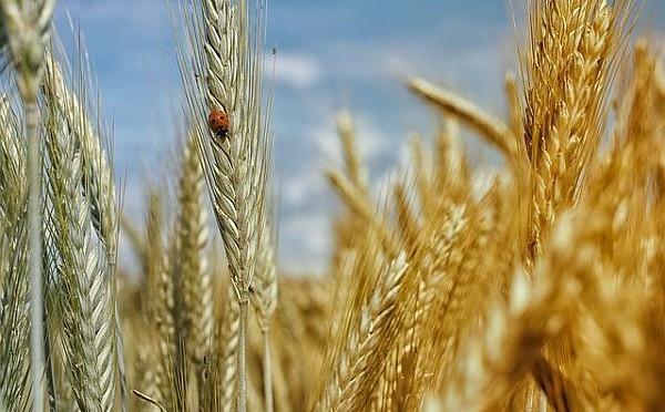 Cumpar Ferma Judetul Galati – Cumparari Terenuri Agricole