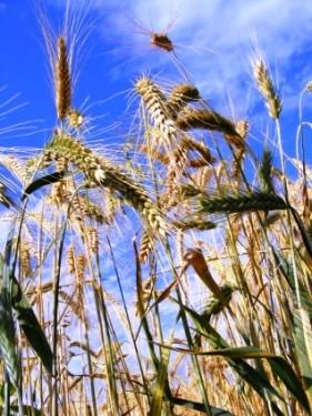 cumparari terenuri agricole