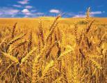 cumpar teren arabil