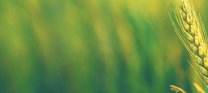 Cumpar Ferma Agricola Judetul Giurgiu – Cumpar Teren Arabil