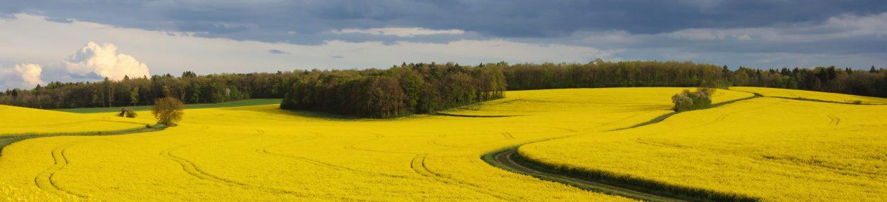 Cumpar Ferma Agricola – Cumpar Teren Agricol – Cumpar Ferma Viticola