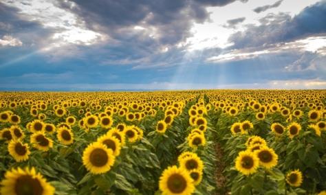 Cumpar Teren Agricol | Cumparari Terenuri | Cumpar Terenuri Agricole | Cumparari Terenuri Agricole