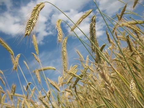 Cumpar Teren Agricol cumpar ferma,cumpar ferma agricola,cumparam ferme agricole,cumpar ferme agricole,cumpar ferma viticola,