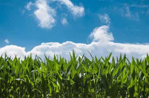 cumpar ferma agricola