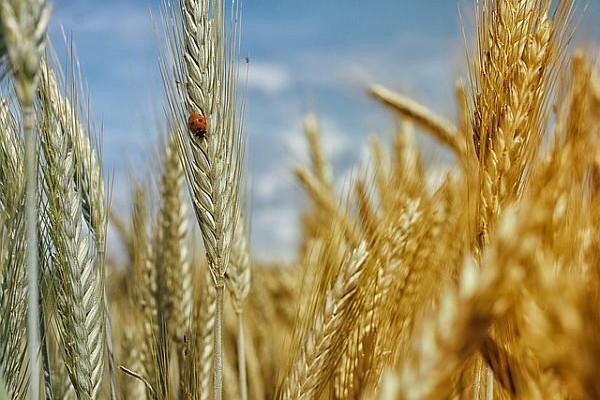 cumpar teren agricol Ilfov