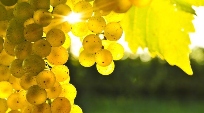 cumpar teren pentru ferma viticola
